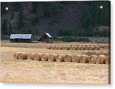 Acrylic Print featuring the photograph Montana Hay Harvest by Vinnie Oakes