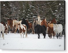 Montana Herd Acrylic Print
