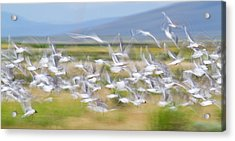 Montana, Red Rock Lakes National Acrylic Print by Elizabeth Boehm