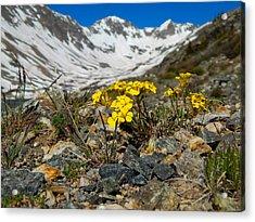 Blue Lakes Colorado Wildflowers Acrylic Print by Dan Miller