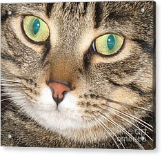 Monty The Cat Acrylic Print by Jolanta Anna Karolska