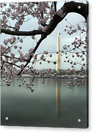 Monumental Blossoms Acrylic Print by Zachary Hitchcock