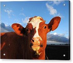 Moo Don't Say Cow Acrylic Print