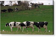 Moo Train Acrylic Print