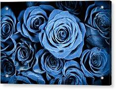 Moody Blue Rose Bouquet Acrylic Print by Adam Romanowicz