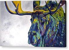 Moody Moose Acrylic Print