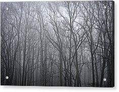 Moody Outlook Acrylic Print by Mary Zeman
