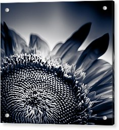 Moody Sunflower Acrylic Print by Isabel Laurent