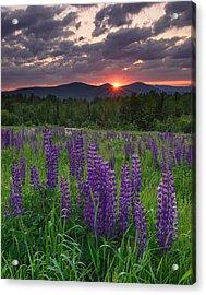 Moody Sunrise Over Lupine Field Acrylic Print