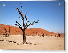 Moon And Tree With Nest, Dead Vlei Acrylic Print by Jaynes Gallery