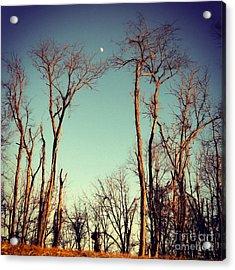 Moon Between The Trees Acrylic Print by Kerri Farley