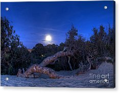 Moon Branch Acrylic Print