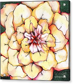 Moon Flower Out Of The Bloomers And Onto The Bloom Acrylic Print by Shadia Derbyshire