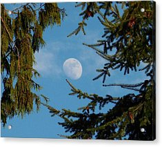 Moon Framed By Trees Acrylic Print by Karen Molenaar Terrell
