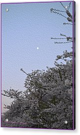 Moon In Cherry Blossom Acrylic Print by Sonali Gangane