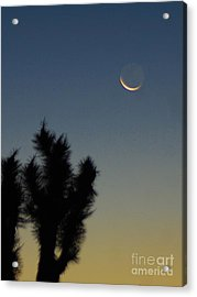 Moon Kissed Acrylic Print by Angela J Wright