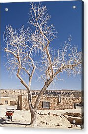 Moon Over Cottonwood Acrylic Print by Jennifer Nelson