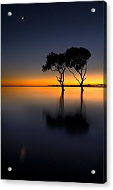 Moon Over Mangrove Trees Acrylic Print