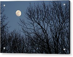 Moon Over Trees Acrylic Print by Larry Bohlin