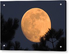 Acrylic Print featuring the photograph Moon Pines by Charlotte Schafer