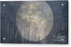 Moon Shadow Acrylic Print by France Laliberte