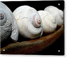 Acrylic Print featuring the photograph Moon Shells by Micki Findlay