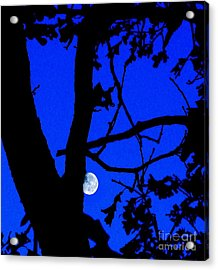 Acrylic Print featuring the photograph Moon Through Trees 2 by Janette Boyd