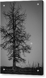 Moon Tree Acrylic Print by Jan Davies