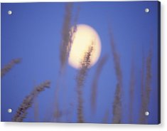 Acrylic Print featuring the photograph Moongrass by Ken Dietz