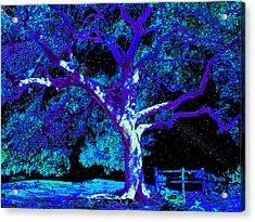 Moonlight Oak Acrylic Print by Dan Terry