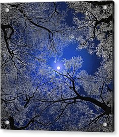 Moonlight Trees Acrylic Print by Igor Zenin