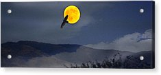 Moonlit Freedom Of Flight Acrylic Print