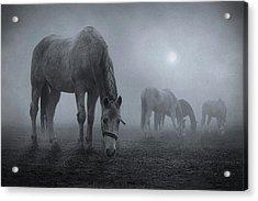 Moonlit Acrylic Print by Samuel Malach