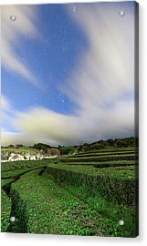 Moonlit Tea Plantation Acrylic Print