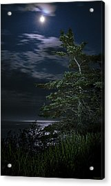 Moonlit Treescape Acrylic Print by Marty Saccone