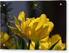 Moonlit Tulips Acrylic Print by Maria Urso