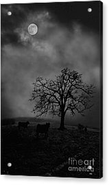 Moonlite Tree On The Farm Acrylic Print by Dan Friend