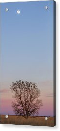 Moonrise Over Blackbirds Acrylic Print by Rob Graham