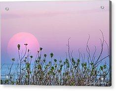 Moonrise Over Dunes Acrylic Print