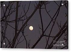 Moonrise Acrylic Print by Susan Williams
