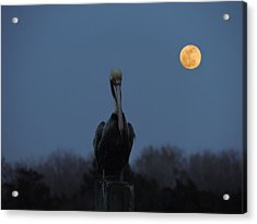 Acrylic Print featuring the photograph Moon's Up by Laura Ragland