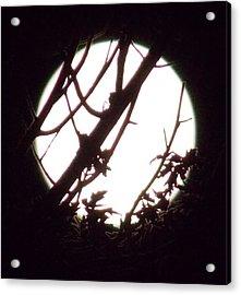 Moonshine 1 Acrylic Print