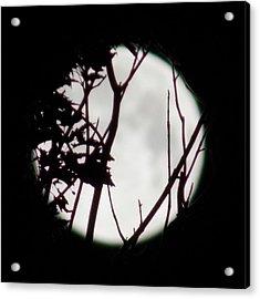 Moonshine 2 Acrylic Print