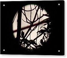 Moonshine 8 Acrylic Print