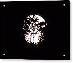 Moonshine 9 Beyond The Forest Acrylic Print
