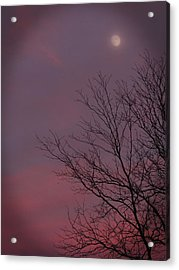 Moonstruck Acrylic Print