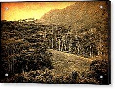 Moorea Landscape Acrylic Print