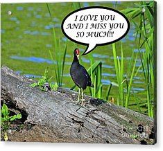 Moorhen Miss You Card Acrylic Print by Al Powell Photography USA