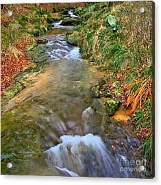 Moorland Stream Acrylic Print