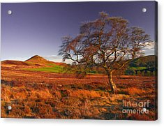Moorland Tree North Yorkshire Acrylic Print